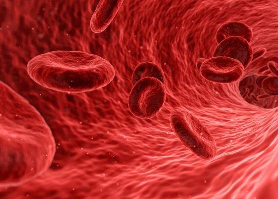 Blutzirkulation